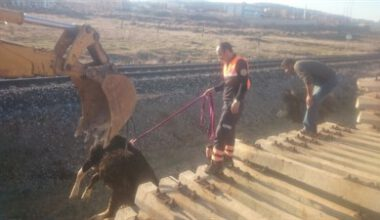 Traverslere sıkışan hayvanlar kurtarıldı – Kocatepe Gazetesi