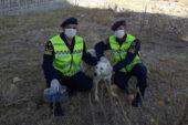 Kafası pet  şişeye sıkışan köpeği,  jandarma  kurtardı