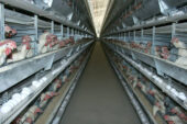 """Yumurta fiyat artışı boğulan sektörün refleksidir"""
