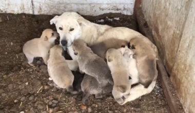 Yavru köpekler  donmadan kurtarıldı