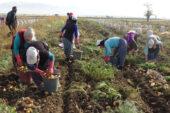 Afyon'a 16 bin tarım işçisi gelecek