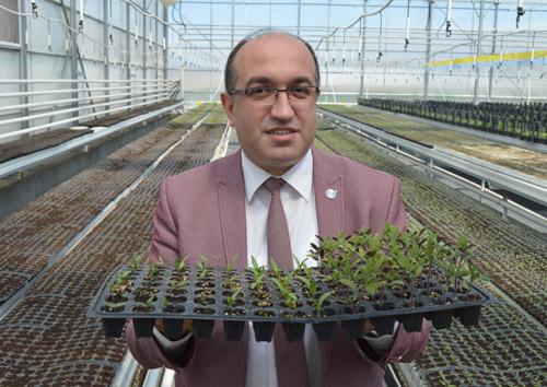 Sandıklı belediyesi ata tohumlarından domates, biber ve patlıcan fidesi yetiştiriyor