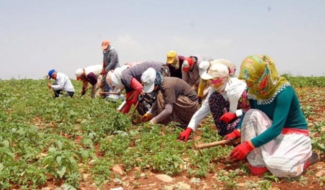 Afyon'a 16 bin tarım işçisi gelecek. Pandemiden etkilenmeleleri için önlemler alınıyor